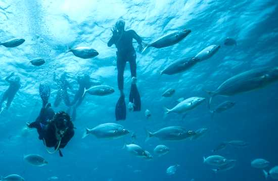 Snorkelen & duiken Corralejo Fuerteventura