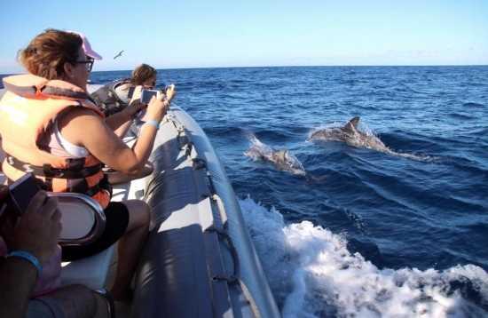 Walvissen en dolfijnen kijken Morro Jable Fuerteventura
