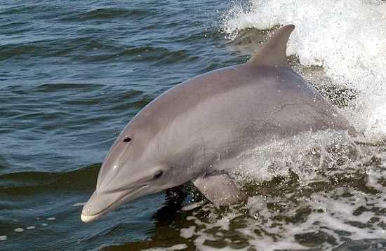 Relaxen & dolfijnen voor Jandía Fuerteventura