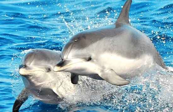 Dolfijn catamaran select Fuerteventura